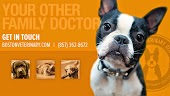 Boston Veterinary Clinic
