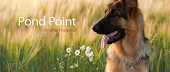 Pond Point Animal Hospital