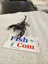 FishCom Pet Store and Feed